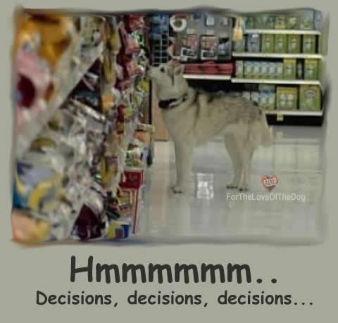 #Siberian #Husky #Humor: https://www.facebook.com/HuskyMomAtSiberianHuskyRescueOfFlorida