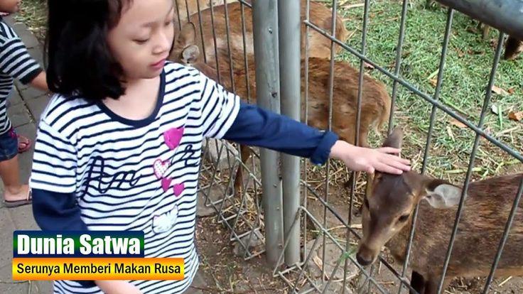 Serunya Memberi Makan Rusa di Taman Flora Surabaya ♥ Mengenal 2 Jenis Ru...