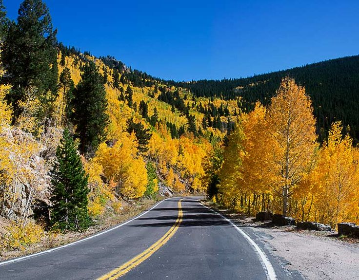 The turning of the aspens on the road to Mt. Evans! My fav time of year.