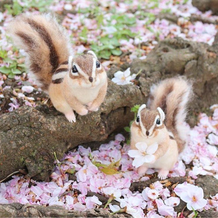 **  まいとし この時期は  じめんがぴんくになるんだよ。  ふしぎだね*  .  .  #桜#sakura#cherryblossom#お花見🌸  #シマリス#chipmunk  #cotocotofeltworks