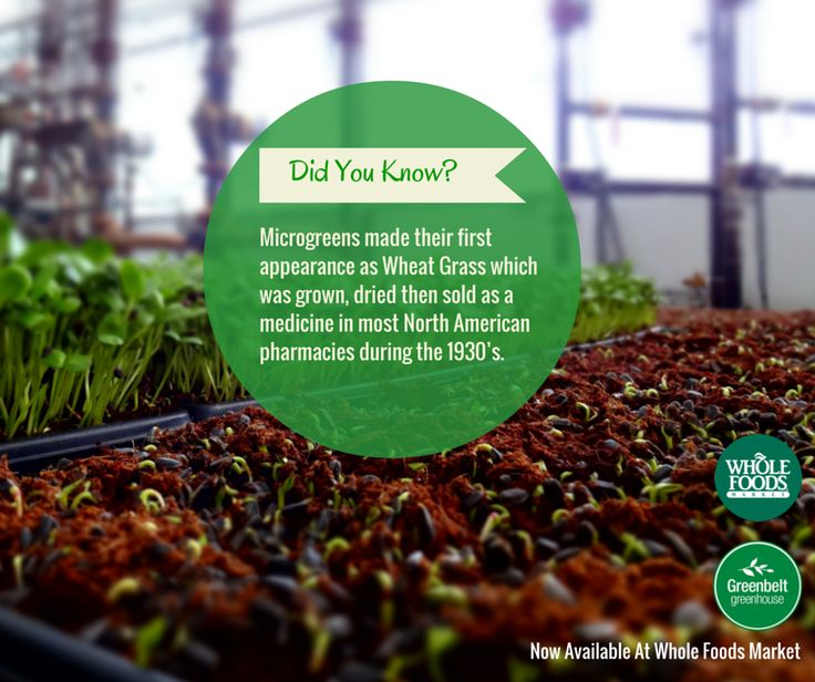 #CleanEating doesn't have to be difficult, especially now that you can buy our microgreens at a convenient Whole Foods Market location.   Check out where to find us in our Whole Foods Retailer Spotlight! http://bit.ly/1yvneg8 #LoveMicrogreens