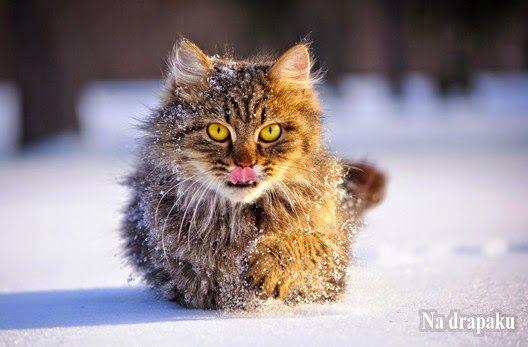 #Kot wychodzący zimową porą