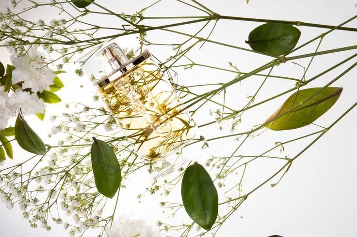 #FM352 Federico Mahora. Charakter: aksamitny, porywający Nuty zapachowe: Nuta głowy: kwiat pomarańczy Nuta serca: jaśmin Nuta bazy: paczula, miód Rodzina zapachowa: Kwiatowa Typ: Prowokujące Pojemność: 50 ml Zaperfumowanie: 20%