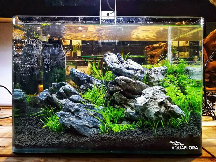 Layout by AquaRomy at ZOO&ZO dierenspeciaalzaak in the Netherlands two weeks ago during the aquascaping event powered by Aquaflora.  #Aquaflora #Aquascaping #planted #aquarium #aquatic #plant #freshwater #plantedtank #aquascape #plantedaquarium