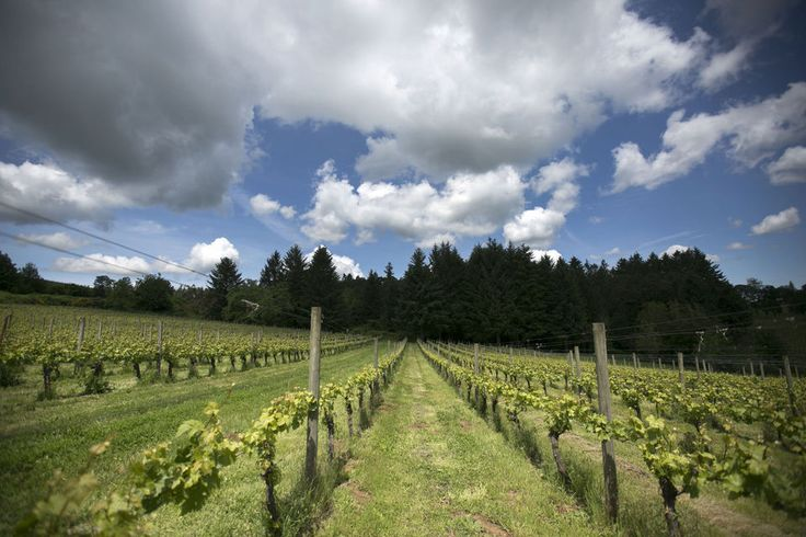 All that good growing weather also increased how many grapes were harvested per acre planted nearly 60 percent.