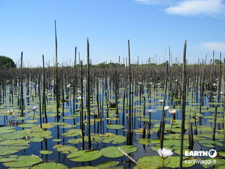 Delta dell'Okavango, #Botswana. #Viaggiare #Viaggio #Africa