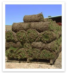 Contact us for your turf needs - http://www.buffaloturf.com.au.