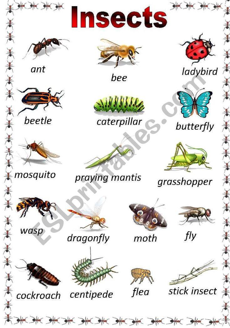 Pin On Troop 697 Types of bugs for preschoolers