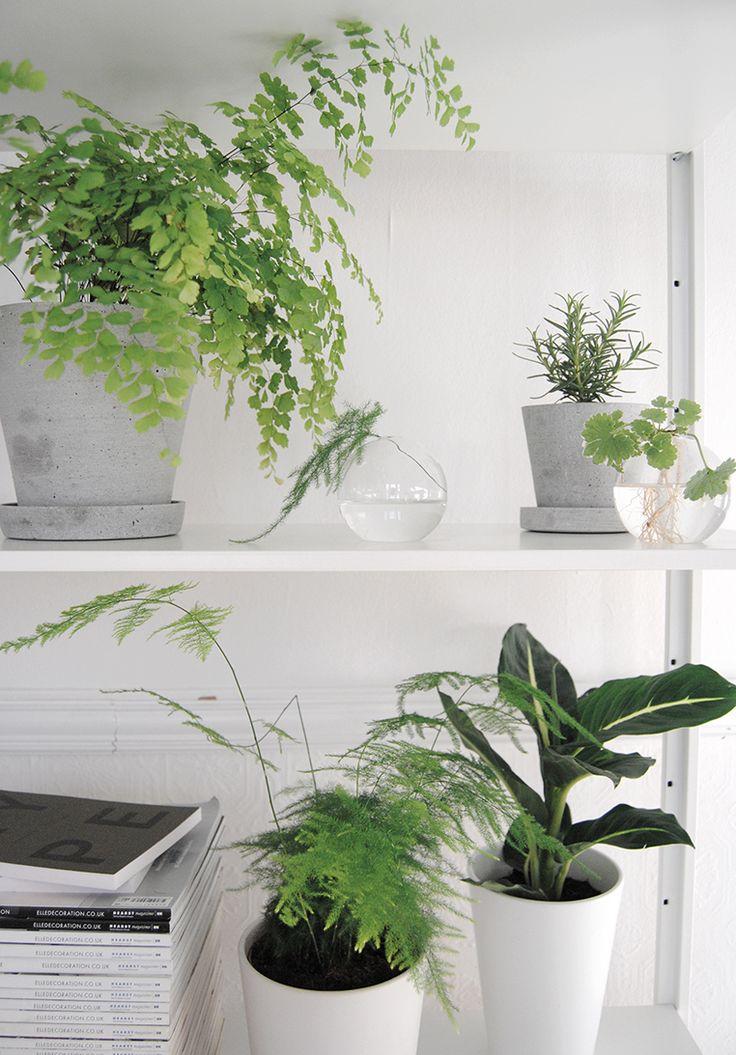 25 best ideas about indoor zen garden on pinterest zen garden design japanese gardens and - Indoor desk plants ...