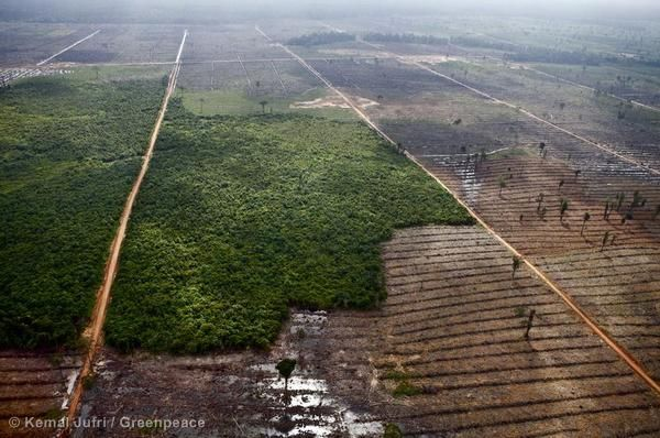 A lot of the forests in Indonesia are located on peatlands, which are one of the world's richest stores of carbon.