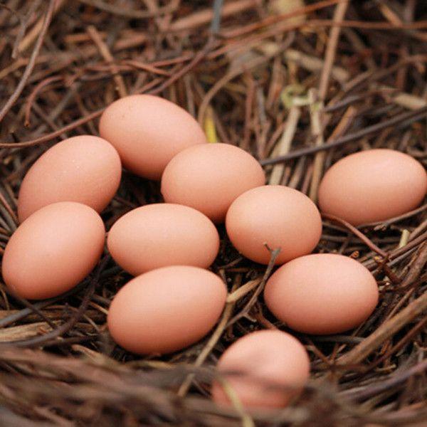 New 2017 Artificial Bird Nest and Eggs