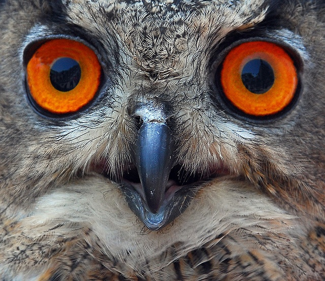 Neil, who is now an amateur bird photographer, has gotten me excited about owls.  Be wise.