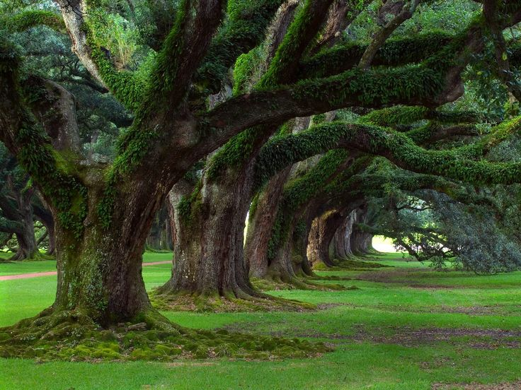 There, under the gentle hand of the Green Man, the offspring of the original trees of the druids' sacred groves may now populate those areas.
