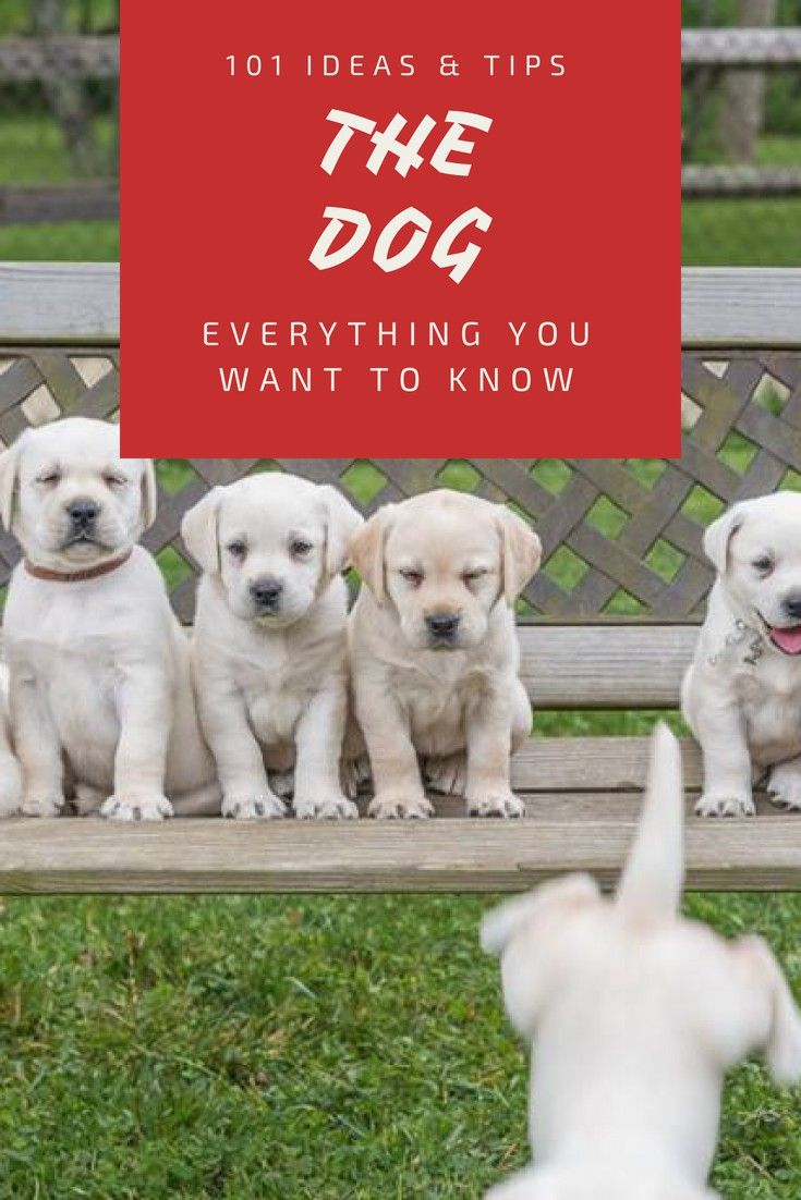Dog Training Training Tips To Help Your Dog Achieve His Best