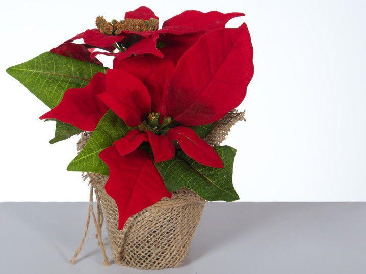 Küntslicher Weihnachtsstern Rot 3 Stück Christstern Poinsettie Kunstblume Deko | Möbel & Wohnen, Dekoration, Blumen & Künstliche Pflanzen | eBay!