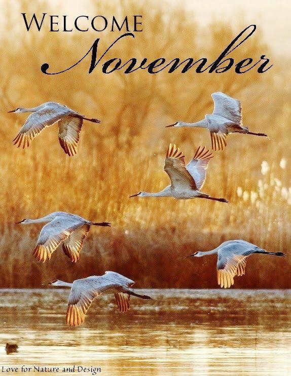 Welcome November! ❤️