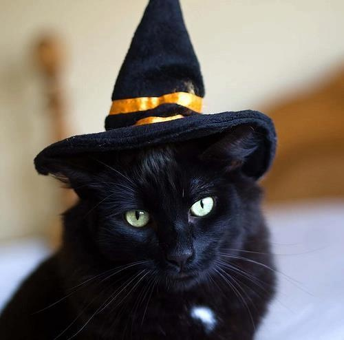 Halloween Cat. The rakish tilt of the witch's hat really puts this one over the top...