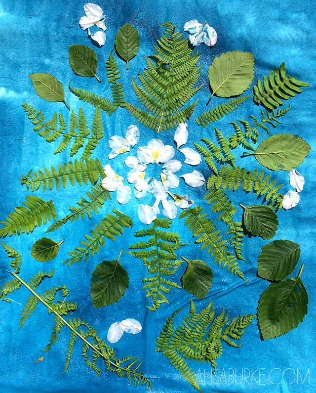 Sun prints are typically created with special paper or fabric treated with cyanotype (a solution ofpotassium ferricyanide and ferric amm...