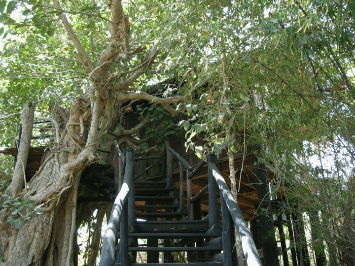 Best Amazing Tree Houses Images On Pinterest Amazing Tree - Contemporary banyon treehouse california