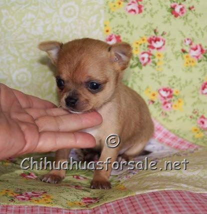 Lil Capone - cute cute cute!