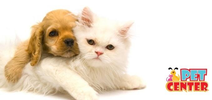 ¡Mima a tu Mascota con esta increíble oferta de un baño de burbujas y aromaterapia + Secado y peinado + Corte y pintado de uñas + Limpieza de oídos + Cepillado de dientes + Lazos ó corbata en Pet Center