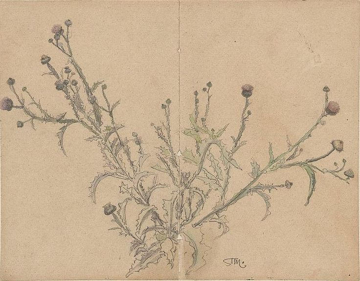 File:Stanisław Masłowski (1853-1926), Oset (Thistle), pencil and watercolor on cardboard, ca 1876-1878.jpeg
