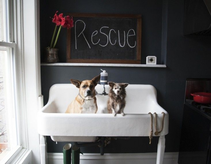 Vintage double sink belonging to the owner of Found My Animal   Remodelista