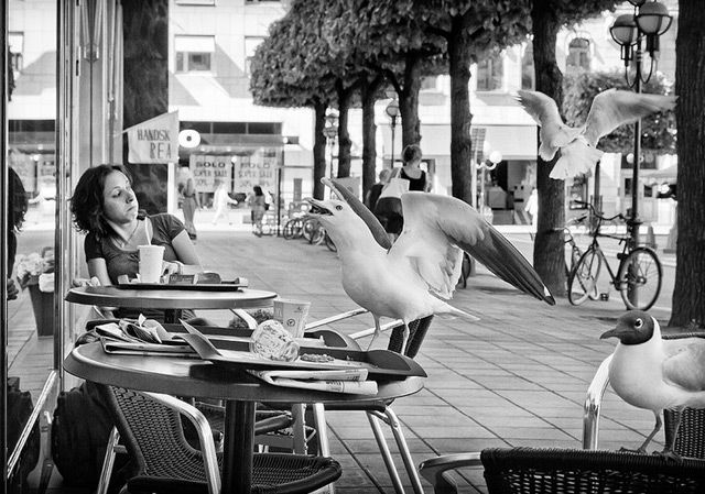 Photographic timing is important. In this picture a bird takes food from a nearby table after surprising a nearby woman.