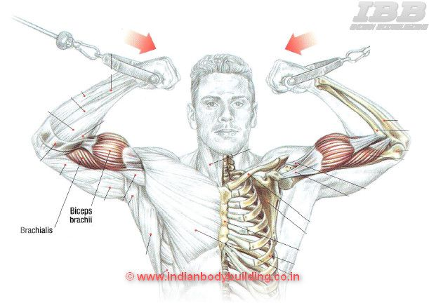 Biceps Workout High Pulley Curls