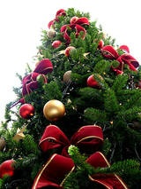 How to Make an Automatic Christmas Tree Watering System  http://www.ehow.com/how_5743743_make-christmas-tree-watering-system.html