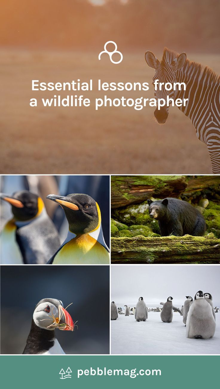 Some essential tips and words of wisdom from wildlife photographer, Sue Flood. Spending your life travelling the globe capturing iconic images of some of our rarest and cutest species, it's a dream job right? #wildlifephotography #photography #photographytips #travelphotography