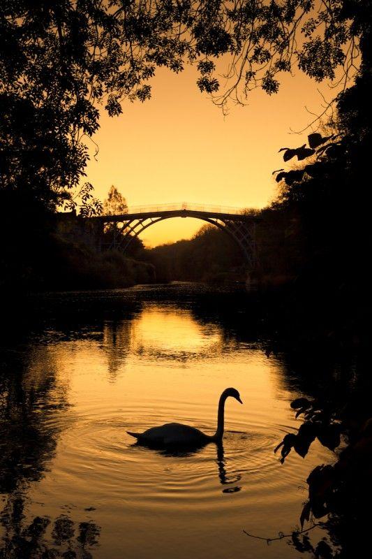 Sunrise Swan - Ironbridge, Shropshire