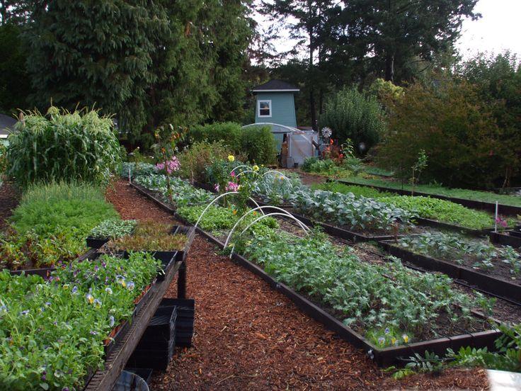 16 Best Pretty Vegetable Gardens Images On Pinterest 400 x 300