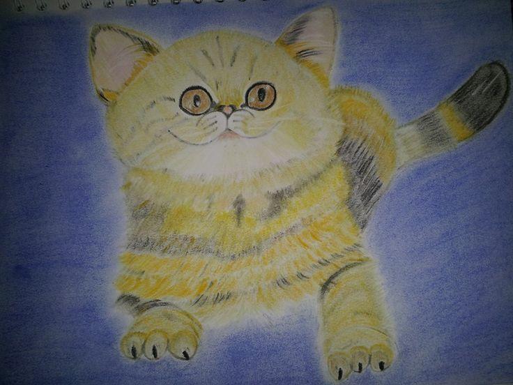 Gato - Pasteles suaves
