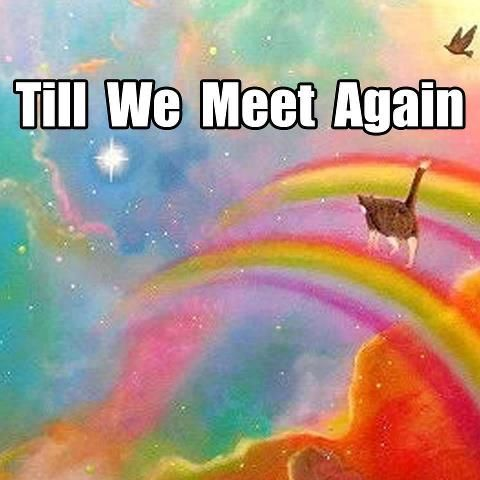 For Lyonel our beloved cat. You will be missed but not forgotten.