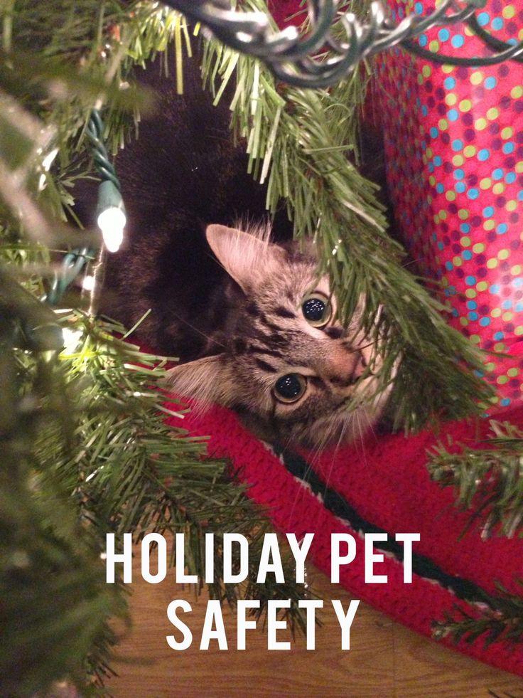 Best 25 pet safe ideas on pinterest diy halloween for Easy houseplants safe for pets