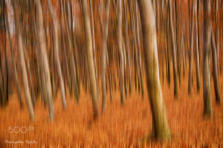 Autumn beech forest. - null