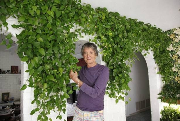 Indoor gardener can't get enough ivy | Dallasnews.com - News for Dallas, Texas - The Dallas Morning News
