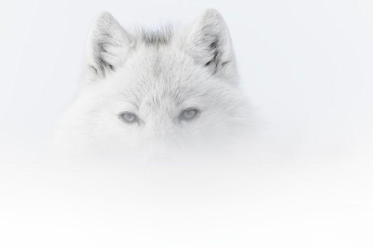 La fotografia naturalistica di Vincent Munier