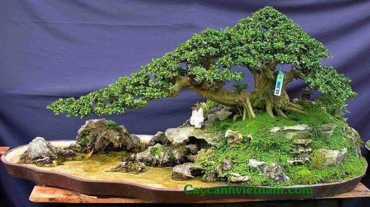 89 besten bonsai w lder und landschaften bilder auf for Bonsai pflanzen