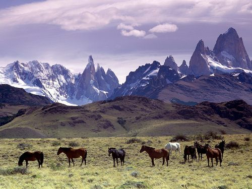 Horses grazing in the grass below the Andes in South America. travel
