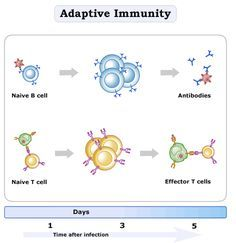 The innate and adaptive immune systems Really Awesome website on Immunology!