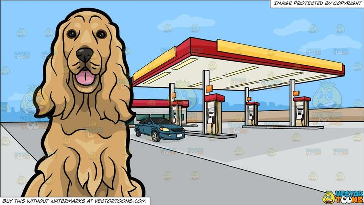 An Adorable Cocker Spaniel and A Gas Station On The