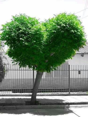 Love tree ~ nature love