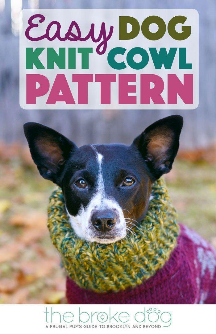 309 besten Pet DIY Bilder auf Pinterest | Basteln, Einfache ...