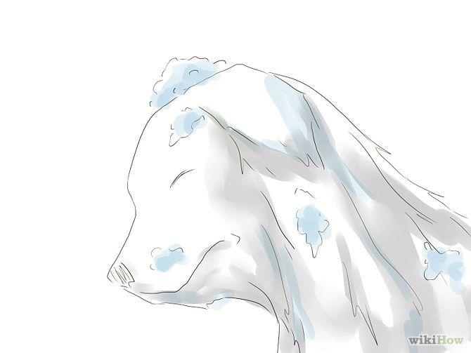 Les 25 meilleures id es de la cat gorie anti puce sur for Anti puce maison