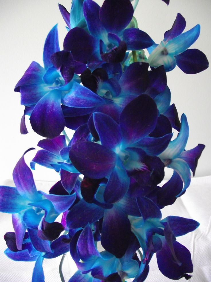 blue orchids perfect flower for a peacock wedding