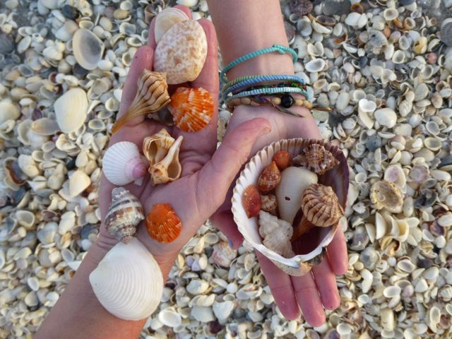 Sanibel Island Shells: 207 Best Shelling Images On Pinterest