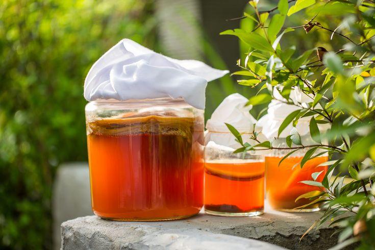 Kombucha! Starodávný kvašený čajový nápoj, který byl ceněn po mnoho staletí v mnoha různých kulturách! - www.Vitalitis.cz