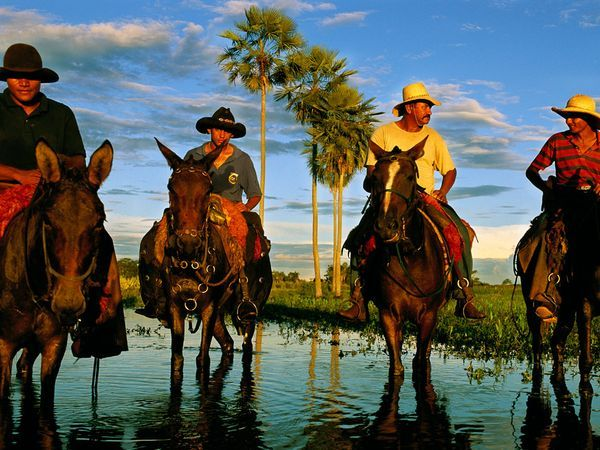 Pantanal Cowhands - Cowhands pause on mule and horseback during the flood season in the Pantanal, a wetland ecosystem in parts of Brazil, Bolivia, and Paraguay. Ranchers in the enormous landlocked river delta are increasingly taking in ecotourists to supplement their income from cattle.